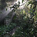 Sunrise on the Border Track, Lamington National Park, Gold Coast Hinterland, Queensland, Australia.JPG