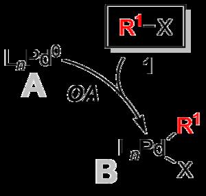 Suzuki reaction - Suzuki Coupling Oxidative Addition