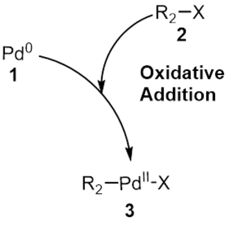 Suzuki reaction - Suzuki Coupling Oxidative Addition