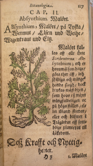 Johannes Palmberg - From Serta Florea Svecana – Absinthium