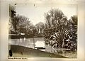 Sydney Royal Botanic Gardens (8743187654).jpg