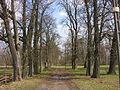 Szreńsk, park, aleja pomiędzy zamkiem z farą.JPG