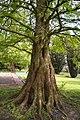 TU Delft Botanical Gardens 104.jpg