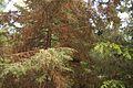 TU Delft Botanical Gardens 13.jpg