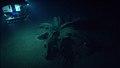 Tar Lily, asphalt volcano, Gulf of Mexico.jpg