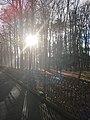 Taras Shevchenko Park. Ivano-Frankivsk.jpg