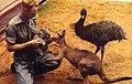 Taronga Park Zoo (27054067916).jpg