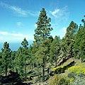 Teide National Park, Canary Islands, Spain. Национальный парк Тейде - panoramio (1).jpg