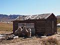 Terelj National Park, Mongolia (11441594344).jpg