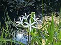 Tf shark valley flower.JPG