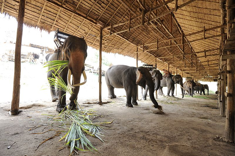 File:Thai Elephant Conservation Center.jpg