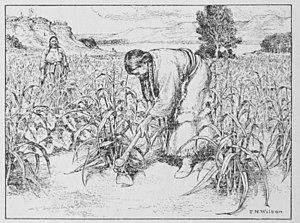 "Hidatsa - The American Indian Fig 7. Hidatsa women tilling the soil. Nine varieties of corn were grown. ""Soft white"" could be used in any kind of corn food. ""Soft yellow"" was easy to pound and turn into meal. Each variety had a distinct taste. Besides corn, the women had beans, sunflowers and squash in their well cared for gardens."