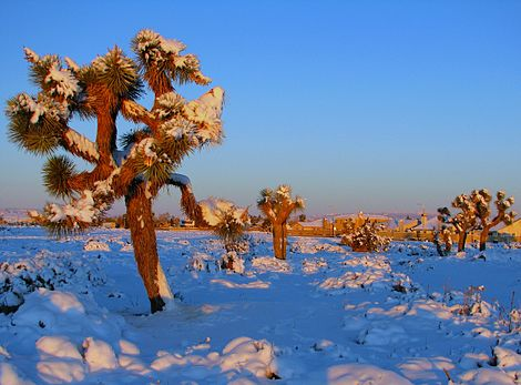 The Mojave Desert in Winter (3117873177)