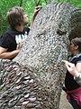 The Money Tree - geograph.org.uk - 519066.jpg