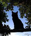 The Silhouette Cat.jpeg