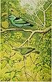 The birds of the Republic of Panama (1965) (19762324924).jpg