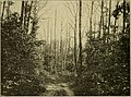 The chestnut bark disease (1912) (14778404845).jpg