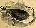 The common objects of the sea shore - including hints for an aquarium (1859) (20047542423).jpg