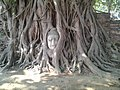 The head of a sandstone Buddha statue nestled in the tree roots beside the minor chapels of Wat Maha That.jpg