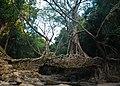 The living roots bridge, Mawlynnong.jpg