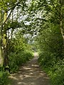 The old Hull to Withernsea Railway Trackbed - geograph.org.uk - 798632.jpg