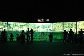 The widescreen - Flickr - j3ssl33.jpg