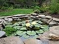 Three waterlilies - panoramio.jpg