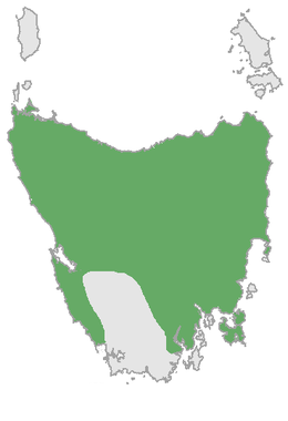Map Of Australia Tasmania And New Zealand.Thylacine Wikipedia