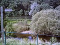 To the river - geograph.org.uk - 184277.jpg