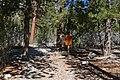 Trail Canyon trail 1.jpg