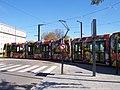 Tram Mulhouse déco FolieFlore 2011.JPG