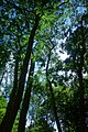 Trees (7887204706).jpg