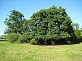 Trees near Bredicot - geograph.org.uk - 857778.jpg
