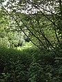 Trees north of river Blyth, Northumberland.jpeg
