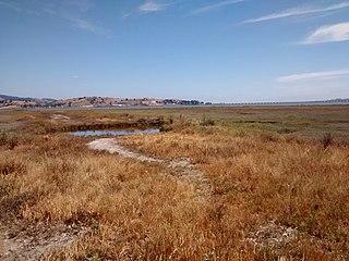 Triangle Marsh