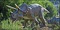 Triceratops-IZE-8751.jpg