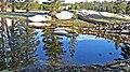 Tuolumne Reflections, Yosemite NP 5-20-15 (18568459272).jpg