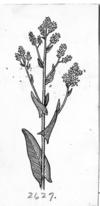 Unidentified W-plant PSF-W1040009 (cropped)