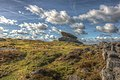 United Kingdom Dartmoor's Pride Rock (8443289159).jpg