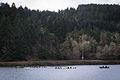 University of Oregon Rowing Practice (Dexter Lake, Oregon).jpg