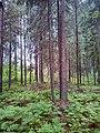 Valdaysky District, Novgorod Oblast, Russia - panoramio (2794).jpg