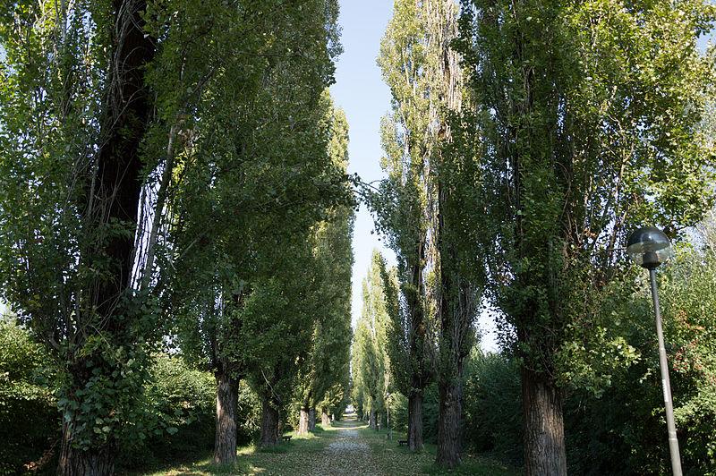 File:Viale del Mauriziano (2).jpg