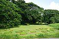 Victoria amazonica Leaves - Janardan Lake - Indian Botanic Garden - Howrah 2012-09-20 0105.JPG