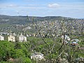 View of Buda.jpg