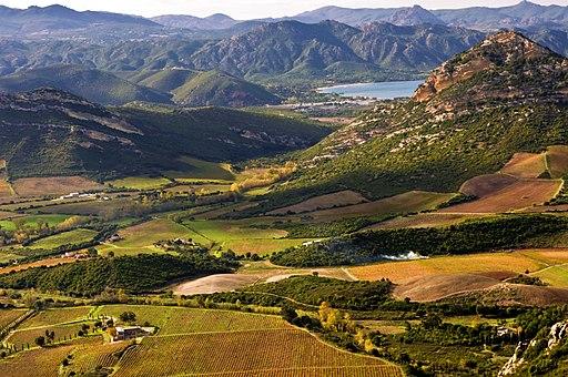 Vignoble de l'AOC Patrimonio près de Saint-Florent