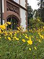 Villa Haas Sinn Topinambur - farbiger Akzent.jpeg
