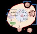 Virus Replication-zh.png