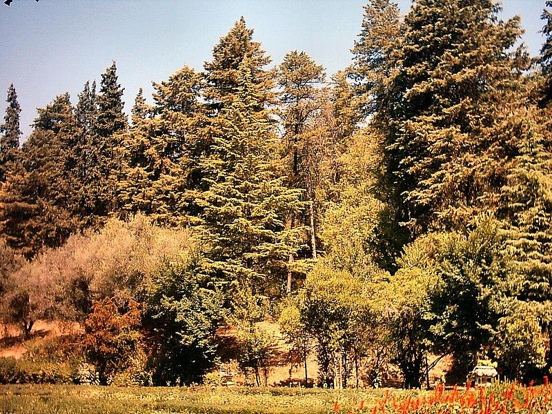 Image:Vista da Mata Nacional dos Sete Montes em Tomar.JPG