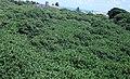 Vista do mirante do cajueiro de Pirangi.jpg