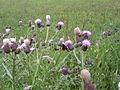 Vlinders in Middenduin.jpg